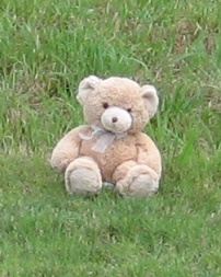 teddy bear in grass