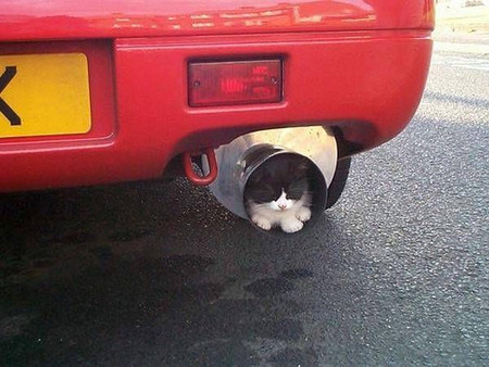 car-with-cat-in-muffler