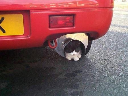 car-with-cat-in-muffler