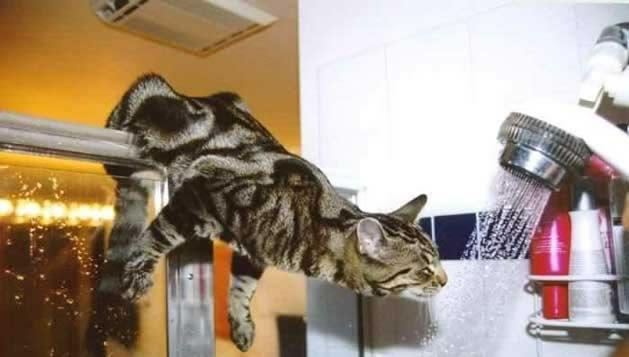 I can has shower!